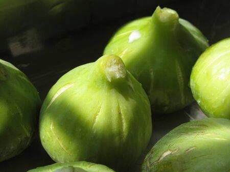 Ripe green figs just picked from the tree Standard-Bild