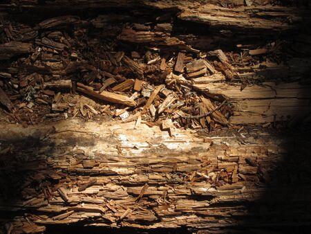 Close up on a broken tree trunk wood shrapnels . Macro texture of broken wood fiber . Wooden background