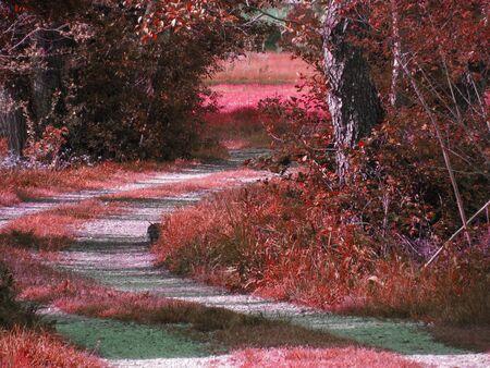 Red colored spooky forest tree landscape . Halloween background Standard-Bild - 141302335