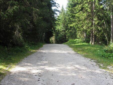 Footpath leading through a green coniferous forest at summer . La Villa, Bolzano, Alto Adige, South Tyrol, Italy