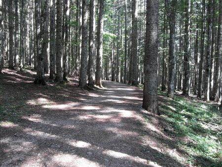Hiking path through forest of beech trees in summer. Abetone, Tuscany, Italy Standard-Bild
