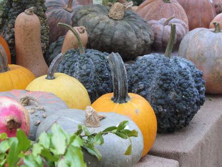 Diverse assortment of pumpkins at market place. Autumn harvest