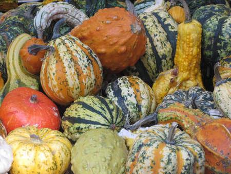 Diverse assortment of pumpkins at market place. Autumn harvest Standard-Bild - 155289428