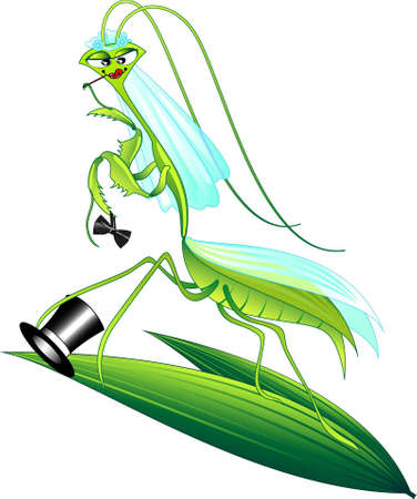 predatory insect: Illustration of a female praying mantis after she ate the male Illustration