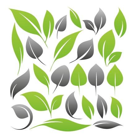 Conjunto de elementos de diseño de las hojas Vectores