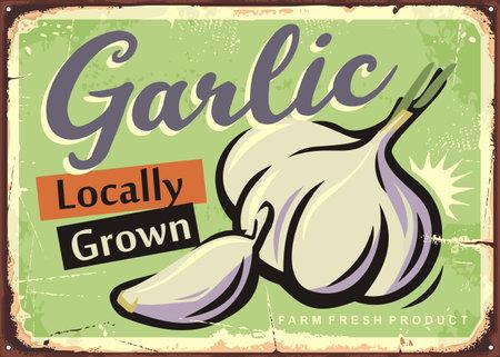 Locally grown garlic retro sign design for farm fresh vegetables. Organic natural product advertisement. Vector retro market poster.