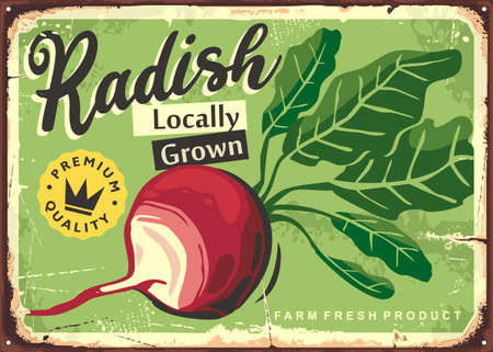 Vegetables market promo sign with farm fresh radish. Agriculture and farming retro ad with healthy plant. Radish vector poster.