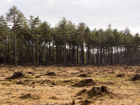 ontbossing Stockfoto