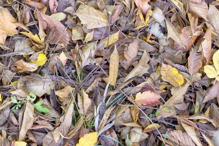 dode bladeren: Dode bladeren achtergrond