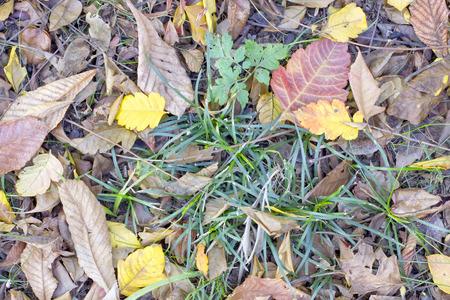 dode bladeren: Groene vegetatie omringd door dode bladeren