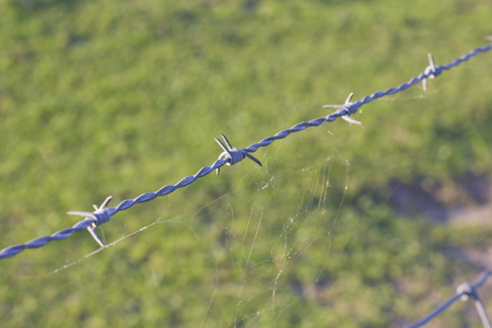 Closeup image of a rusty barbed wire with a spider web. Stock Photo