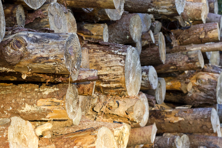 Profile image of a pile of logs with some sunrise light.