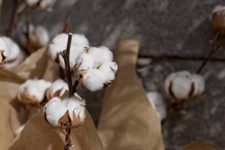 Closeup imagen de las bolas de algodón. Foto de archivo - 75015974