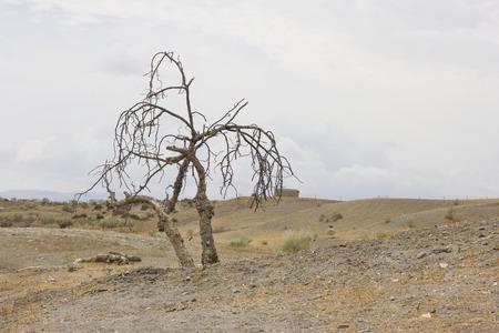 Dry tree resting in a hill in the desert of Tabernas (Spain). Foto de archivo