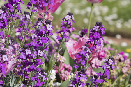 Group of plants full of vivid purple color flowers.