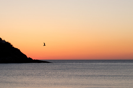 Colorful sky at sunset with a seagull flying (San Sebastian, Spain). Foto de archivo