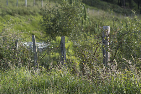 Old and abandoned barrier made with barbed wired covered with vegetation.