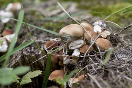 Closeup image of small mushrooms growing in a tree stump.