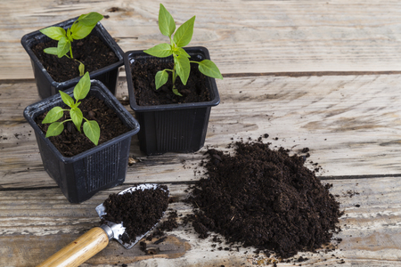 Plants with trowel and compost