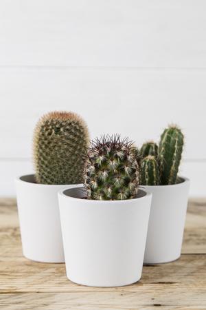 Cactus plant trio in white pots