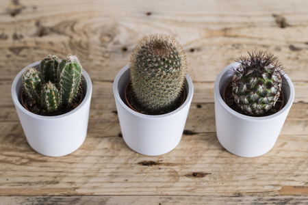 trio: Cactus plant trio