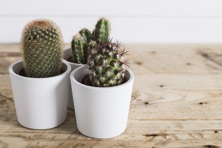 zen interior: Cactus plants in white pots Stock Photo