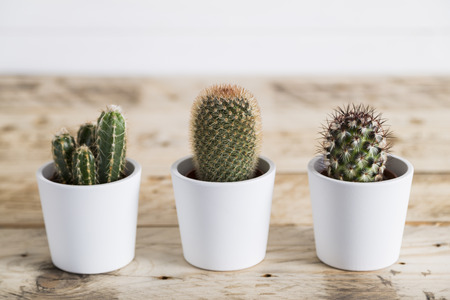 trio: Cactus trio
