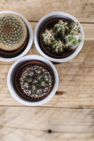zen interior: Group of cactus plants