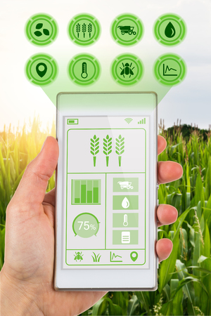 Smart agriculture and agritech industry concept showing farmer with smartphone in field using app to read data on crops.