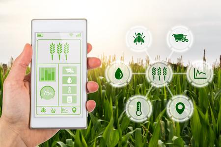 Concept voor agritech-industrie met boer met smartphone-app en grafisch display met agrarische slimme boerderijpictogrammen op een bakcground van een veld met gewassen.