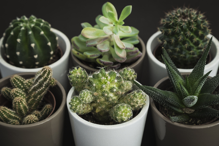 Collection of six small cacti and succulent plants in pots in two rows