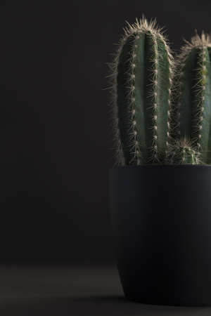 Dark grey pot with spiky cactus against a black background