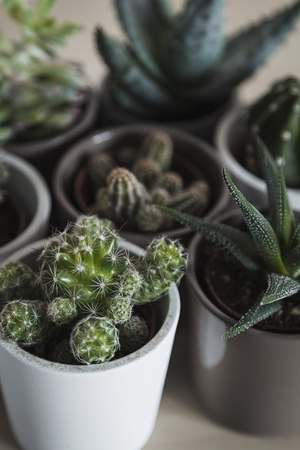 Group of succulent plants and cacti arranged in a group