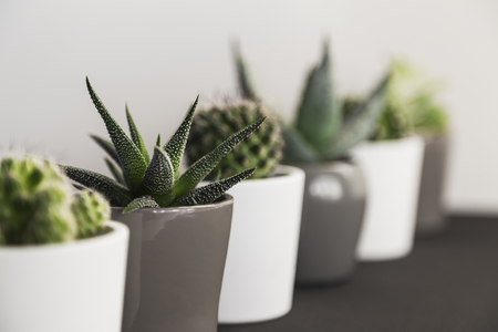 Perspective view of row of succulent plants and cacti in small pots on a shelf indoors