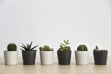 Row of six small cacti and succulent plants in pots in a light indoor environment Banco de Imagens