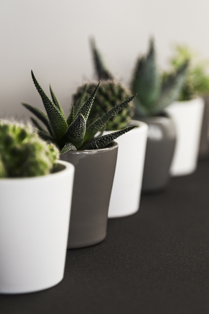 Row of small succulent and cacti plants in pots on a shelf indoors Banco de Imagens