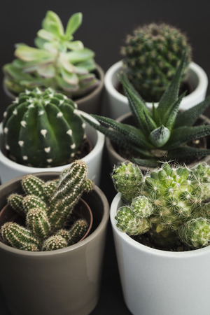 Selection of six small cacti and succulent plants in pots in a group
