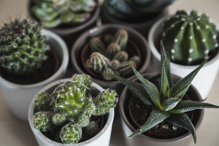 Collection of succulent plants and cacti in small pots arranged in a group