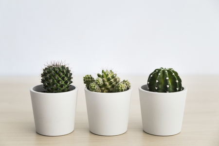 Three small cacti plants in white pots in a light and airy environment Banco de Imagens