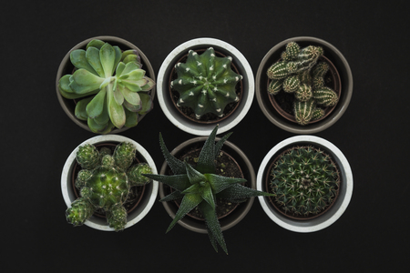 Top down view of six small cacti and succulent plants in pots on a dark background