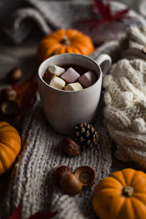 Mug of hot chocolate in fall with marshmallows surrounded by autumn objects like pumpkins, leaves and woolly clothes 免版税图像