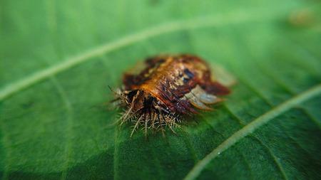 creepy: Creepy insect