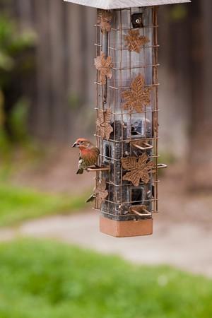 feeder: Feeder and Birds Stock Photo