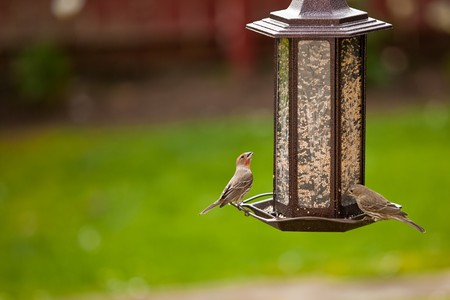 Birds and feeder