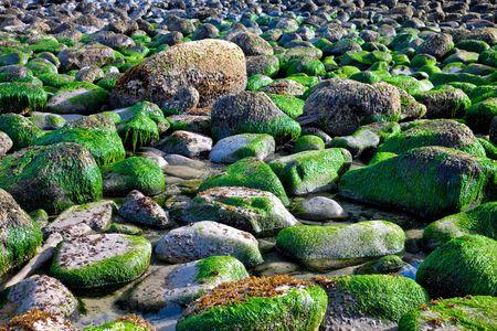 eukaryotic: Rocky ocean shore after high tide Stock Photo