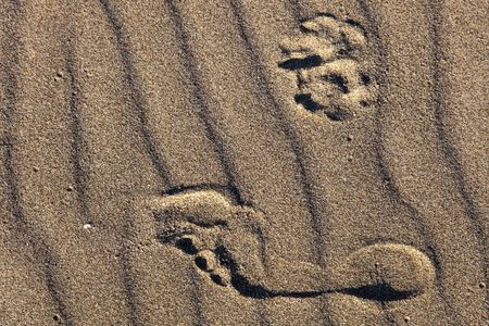 A photograph depicted human and dog tracks on a sand waves, created by ocean breeze.