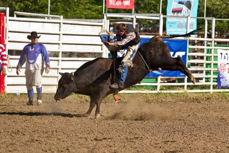 WILLITS, CA - JULY 4: Another rodeo bareback bull rider makes unsuccessful ride at the Willits Frontier Days, Californias oldest continuous rodeo, held July 4, 2011 in Willits, CA.