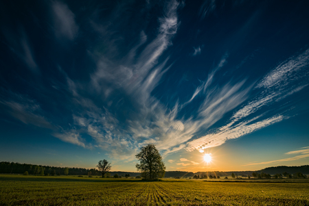 Morning sunrise and a beautiful landscape with fresh grass and trees