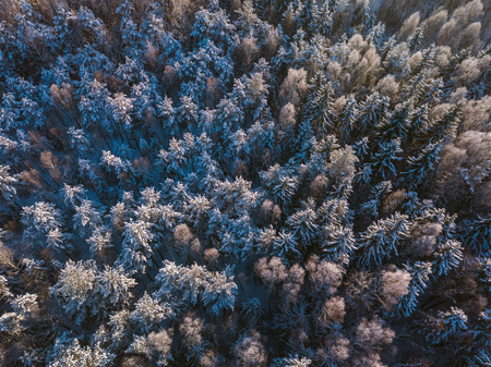 Winter forest with frosty trees, aerial view. Lithuania