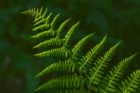 Background image of beautiful green fern at summer Imagens